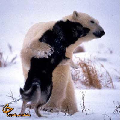 10 عکسی که در این چند سال جنجال به پا کردند! www.TAFRIHI.com